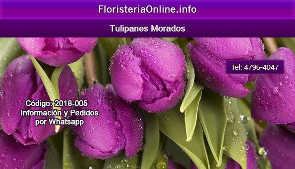 tulipanes morados