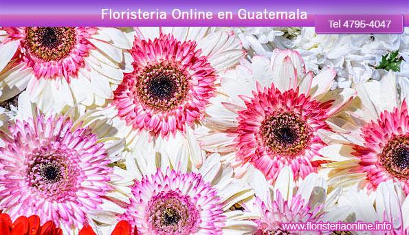 venta de flores para alfombras